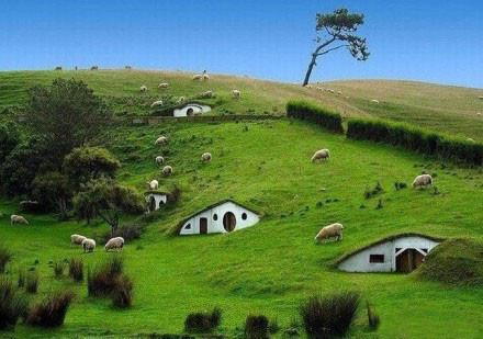 新西兰乡村的房子,你想和谁一起住?