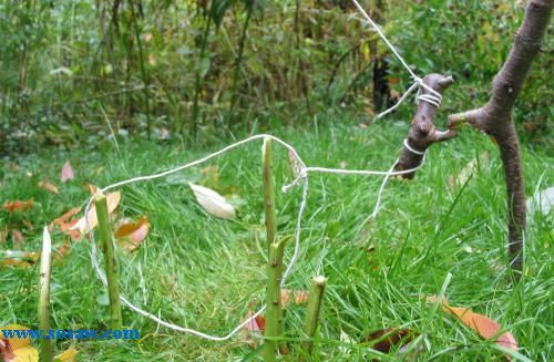 野外生存  设捕猎陷阱和下套